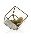 Terariu din Sticlă - Cub pe Colț